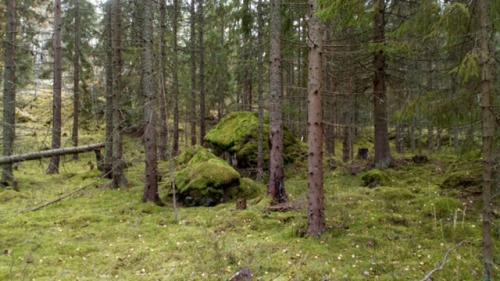 Foto: Lars Sjöberg